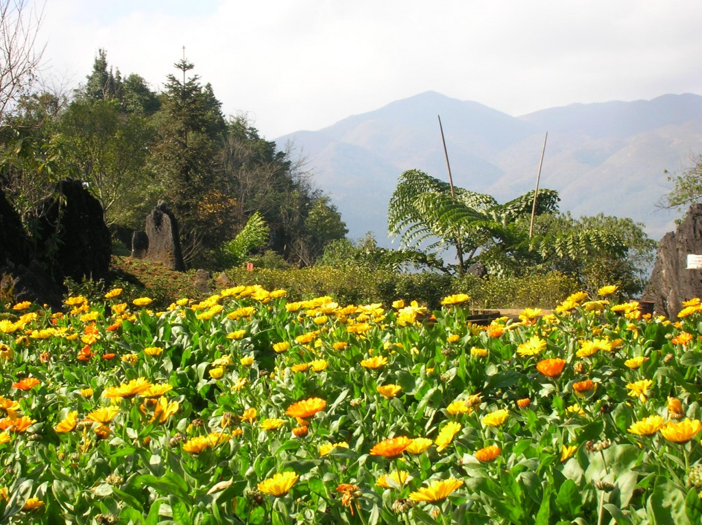Beautiful flowers from a visit to Sapa, Viet Nam
